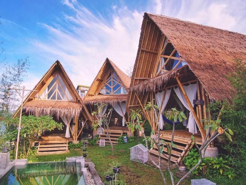 3 jenis bambu untuk bahan bangunan