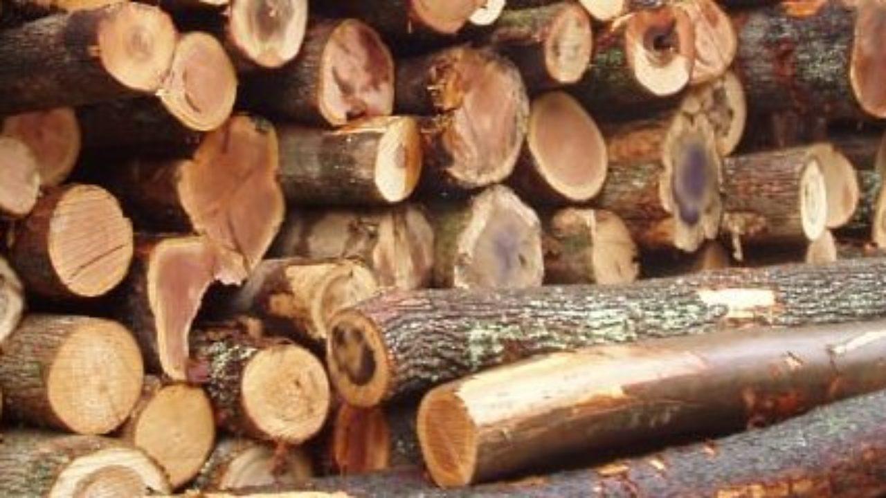 kayu akasia property145