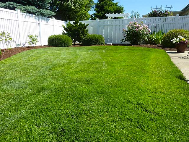 jenis-jenis rumput penghias taman