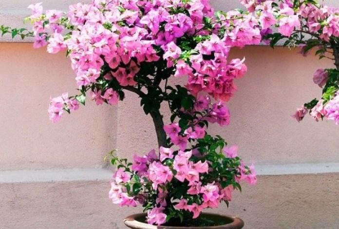 bunga kertas dalam pot