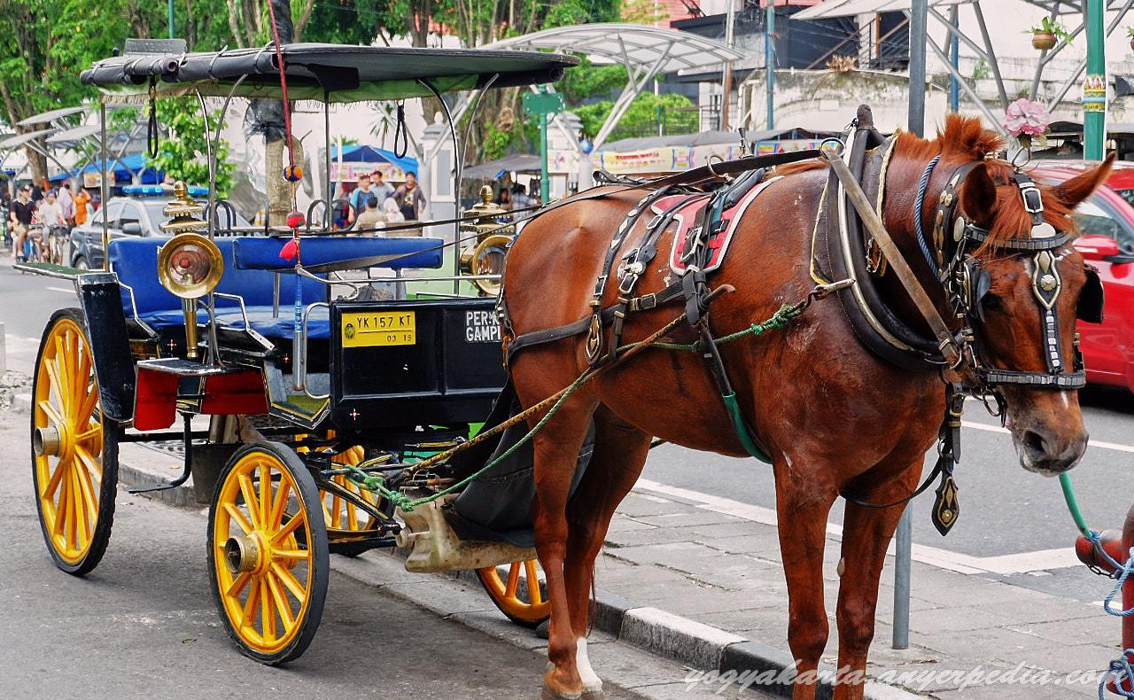 7 Alat Transportasi Tradisional Yang Masih Ada