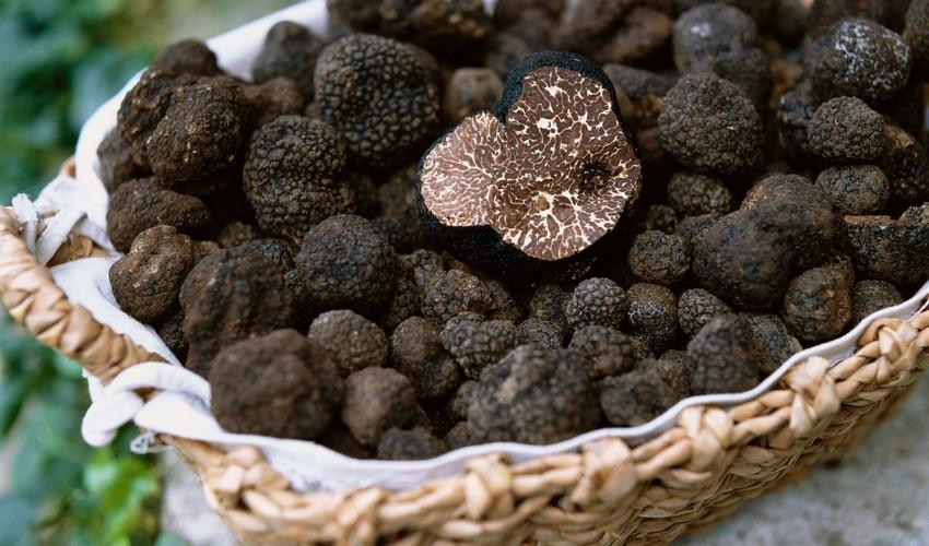 jamur truffles termahal di dunia