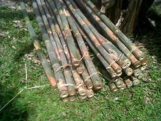 batang bambu tali