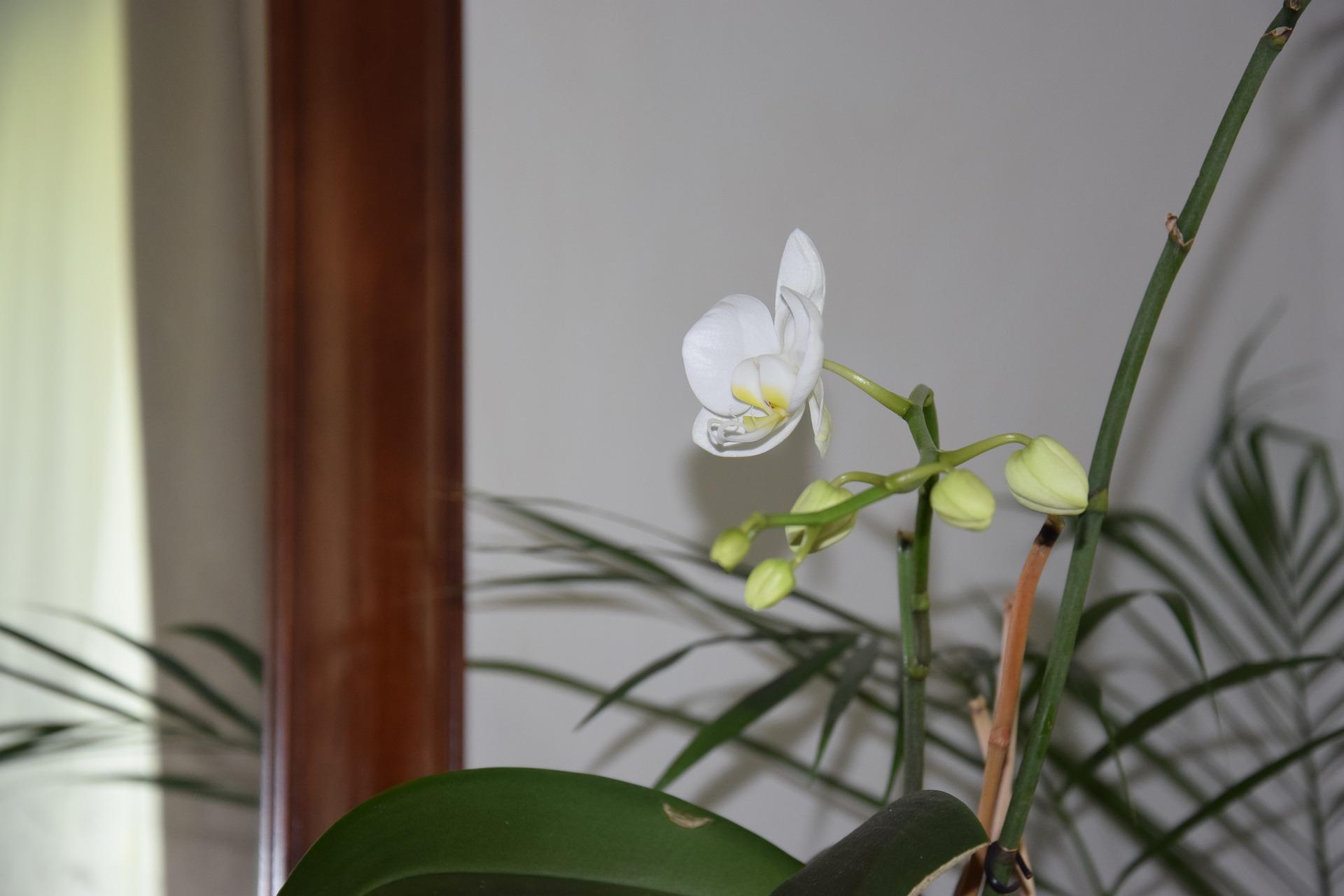 5 Bunga Putih yang Cocok di Tanam di Halaman Rumah